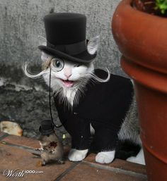 Victorian Cat by Derek Burns  From: Worth1000 Contests http://www.worth1000.com/entries/543309/victorian-cat