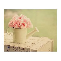Roses Pink Flowers Watering Can HD Wallpaper Roses Pink, White Roses, Pink Flowers, Pink White, Pink Chests, Summer Decoration, Flowers Wallpaper, Wallpaper Backgrounds, Message For Husband