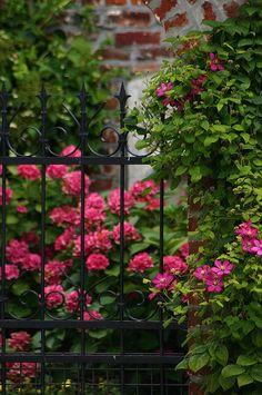 Garden Gate | Love wrought iron fencing/gates. I think it makes a lovely backdrop for planting!!