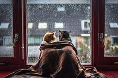 rainy day pals