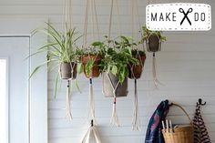 hangingplant1