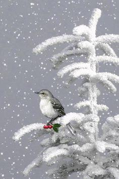 Lonely bird in the snow gif Winter Szenen, I Love Winter, Winter Magic, Winter White, Christmas Art, Vintage Christmas, Xmas, Christmas 2019, Winter Christmas Scenes