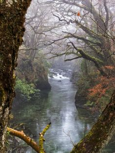 Loch Lomond, Scotland photo via kaitlin