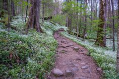 Porter's Creek Trail-Great Smoky Mountains