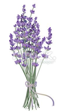 Lavender Royalty Free Stock Vector Art Illustration