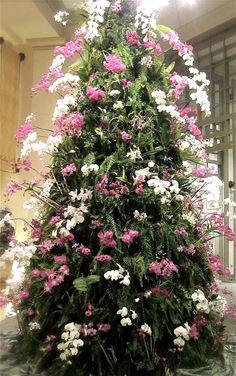 Phalaenopsis orchids Christmas tree. Via Orchid Kingdom.