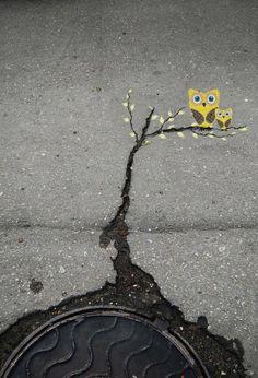 Streetart: Eulen.