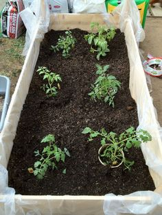 EASY backyard, above-ground, garden boxes.  *REMEMBER*...  Punch holes in plastic!!!  (Or use several layers of newspaper or cardboard in the bottom instead of lining with plastic.)