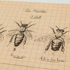 """Affichette  Cabinet de curiosités """"Hyménoptères"""" 1"""