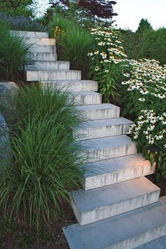 #Concrete steps with vibrant green plants and #daisies