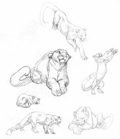 Academy of Art Character and Creature Design Notes: Claire Wendling's Cats Mountain lion