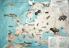 Image result for animals of europe