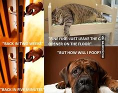 cats vs dogs memes | Cats Dogs Memes Funny