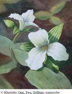 One, Two Trillium. Original watercolor by Kelli Hertzler. (c). All rights reserved.