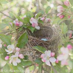 Spring nest.