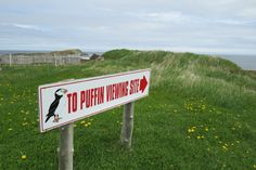 All you need to know about the puffin viewing site in Elliston. Hands down the best place for puffin watching in Newfoundland! Newfoundland Canada, Newfoundland And Labrador, St John's Canada, Montreal Canada, Alberta Canada, Canadian Travel, Canadian Rockies, East Coast Road Trip, Atlantic Canada