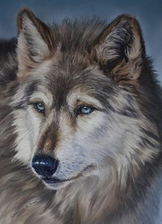 Artist Catherine E. Wolf Pictures, Pictures To Paint, Animal Paintings, Animal Drawings, Wolf Drawings, Balto And Jenna, Watercolor Wolf, Wolf Artwork, Wolf Painting