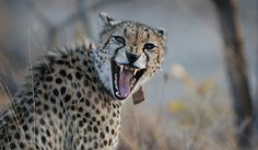 Volunteer Work, Wildlife Conservation, Kenya, Africa, Good Things, Blog, Animals, Organizations, Animales