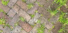 weeds in pavement bleach garden gardening