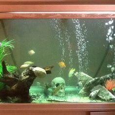 Properly Aerating Your Aquarium | RateMyFishTank.com