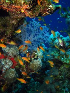 Coral reef in Dahab - Egypt