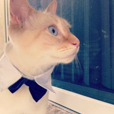 Mr. O'malley looking dapper! (tie collar form petco for about 4 dollars!)