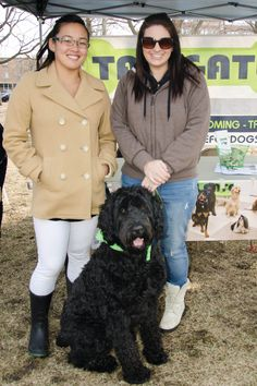 Onyx is a working Therapy Dog and a Fine Canine Drill Team Dog. He is a Schnoodle! #schnoodle #therapydog