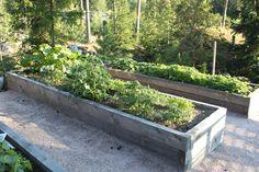 Istutuslaatikko, puutarha, piha