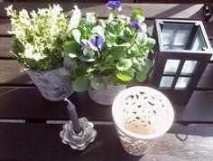 Enjoy SPRING. My First stuff&flowers GARDEN. BEAUTY. Like. You?