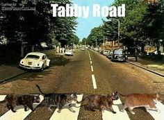Beatles Tabby Road---the cats probably sing better than a lot of the Beatles' later work. Funny Cat Memes, Funny Cats, Funny Animals, Cute Animals, Cats Humor, Pet Memes, Silly Cats, Cats And Kittens, Crazy Cat Lady