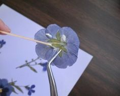 Gluing pressed flowers