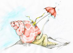 Shell-ter   Zeylanica Umbrellata