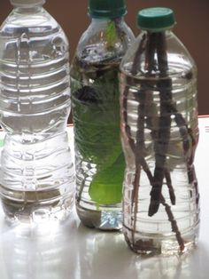 What Happens When We Put Nature Into Water?....take the kids on a nature walk and put what they find in a bottle....