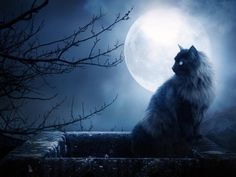 moonlight+wallpaper   The Moonlight Wallpaper - Download The Free Black Cat In The Moonlight ...