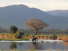Parque Nacional Mana Pools Sapi, Chewore e Urungwe Safari áreas Places Ive Been, Places To Go, Safari, My Route, Out Of Africa, Zimbabwe, Heaven On Earth, Pools, Adventure Travel