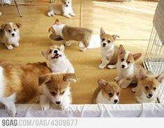 Cuteness overload.... :D:D :D :D