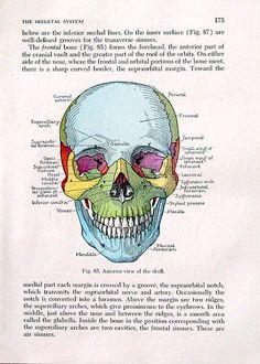 Menselijke schedel - 1956 Vintage anatomie boekenpagina 8 x 6