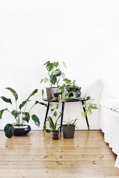 THE MOODBOARD: GOING GREEN. Amazing indoor plants are your shortcut to Spring.