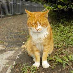 Kiki #cat #orangetabby #orangetabbycat #catstagram #catofinstagram #猫 #茶トラ半白