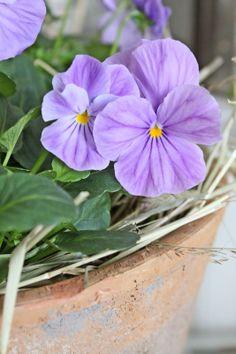 spring color ♥