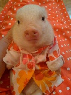 A small pig wearing pink and orange pajamas.       LOL why do we need this?     soooo funny