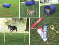 Win an Agility Course for your dog on Puppy Tales!