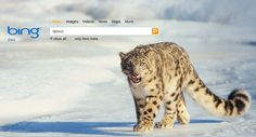 Cool picture of I think a leopard that lives in a snowy place. :-)