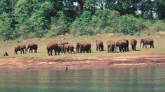 Image gallery - 1500 images on Kerala | Kerala Tourism