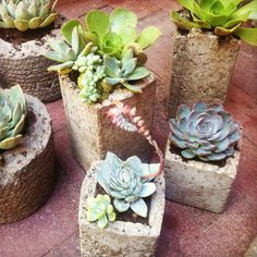 DIY Succulent containers. great for a centerpiece!