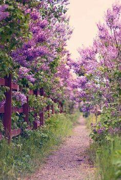 Purple Pathway...