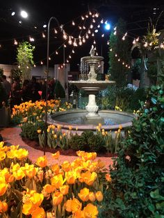 From the 2016 Boston Flower Show at the Seaport World Trade Center.