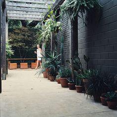Love the black brick hotel san jose austin Back Gardens, Outdoor Gardens, Hotel San Jose Austin, Succulent Pots, Potted Succulents, Cinder Block Walls, Black Brick, Black Walls, Landscape Edging