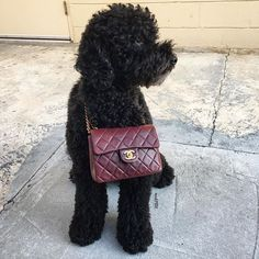 Winston's drooling over this Chanel.. Are you???