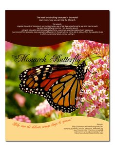 Poster - Monarch Butterfly